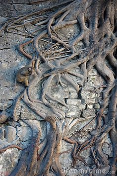 Photo about A Beautiful image of a small monkey climbing an amazing root system that is spread across a stone wall. Image of peacefully, northern, beautiful - 69527629 Macaque Monkey, Small Monkey, Root System, Primates, Monkeys, Beautiful Images, Climbing, City Photo, Lion Sculpture