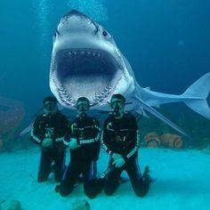 Gadgetflye.com likes Say Cheese!!! #FridayFunnies #ScubaMedicFL #Dive #PADI #UnderwaterPhotography #DiversAlertNetwork #Independent #ScubaInstructor #DiveJax #DiveStAug #DiveStAugustine #GetScubaCertified #OpenWater #AdvancedOpenWater #Nitrox #StAugustine #NREMT #Paramedic #Firefighter #DiscountScubaGear #ScubaTravel #VeteransScuba #FREEApp4iPhone #FREEApp4Android #CPRInstructor #DiveTravel (view on Instagram http://ift.tt/2hWGkdi)