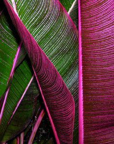 Phone Wallpaper Images, Iphone Wallpaper, Pink Wallpaper, Patterns In Nature, Textures Patterns, Nature Pattern, Micro Photography, Plant Art, Tropical Plants
