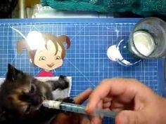 Como dar leite para os gatinhos 2 de 2