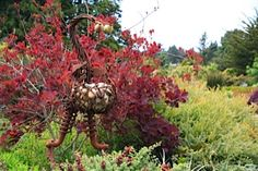 Fort Bragg Attraction: Mendocino Coast Botanical Gardens | FortBragg.com