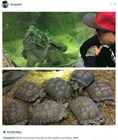 + ideas about Turtle Habitat on Pinterest Turtle Tanks, Box Turtles ...