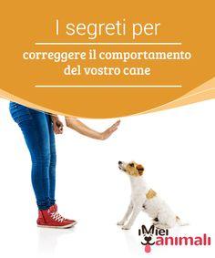 I segreti per correggere il comportamento del vostro cane   Attraverso i segreti per #correggere il #comportamento del tuo cane, potrai insegnargli a #camminare al guinzaglio, a girare e a tornare al richiamo. #Addestramento