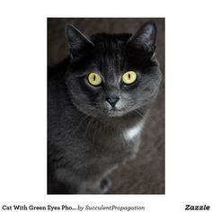 Cat With Green Eyes Photograph Wall Art Poster