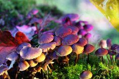 Colorful fungi