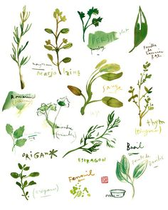 Kitchen art Herb print Food poster Watercolor painting 11X14 green Herbs Kitchen decor. $40.00, via Etsy.