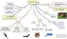 Mappa concettuale sui MAMMIFERI. I mammiferi, sono animali vertebrati , la cui caratteristica è di allattare i cuccioli tramite le mammelle...