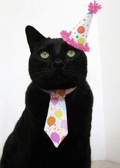 Black cat birthday #petbirthdays
