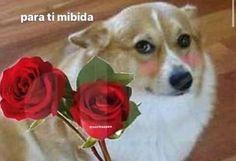 Memes Estúpidos, Cute Memes, Stupid Memes, Best Memes, Funny Memes, Memes Lindos, Spanish Memes, Mood Pics, Wholesome Memes
