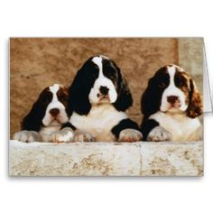 English Springer Spaniel Puppies Greeting Cards