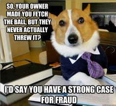 """8.  A dog became a lawyer. 
