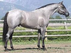 the perfect blue roan