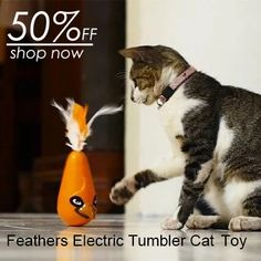 Feathers Cat Toys Play Entertainment Electric Tumbler Cat Toy - Kingdom of Animal's Animals And Pets, Baby Animals, Funny Animals, Cute Animals, Cat Stands, Cute Cat Gif, Cute Pugs, Cat Supplies, Diy Stuffed Animals