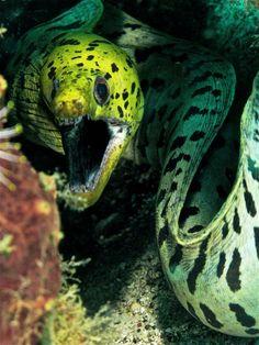 Beautiful yet creepy Eel