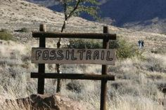 Fossil Trail in the Karoo