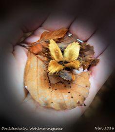 Fundstück: Der Herbst hat Einzug gehalten im Druidenhein.