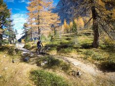 In love with #mountainbiking. And #fall colors. And the #Dolomites. And... : @gopro #hero5 #cycling #mtb #girlswhoride #dolomiti #enduro #enduromtb