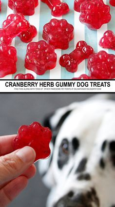 Homemade Dog Food {RECIPE} Cranberry and Herb Gelatin Gummy Dog Treats - These cranberry herb dog treats are are doggone delicious and fully of healthy goodness too! Here's the easy recipe and full details on how they were made. Puppy Treats, Diy Dog Treats, Healthy Dog Treats, Dog Biscuit Recipes, Dog Treat Recipes, Dog Food Recipes, Recipe Treats, Food Tips, Homemade Dog Cookies