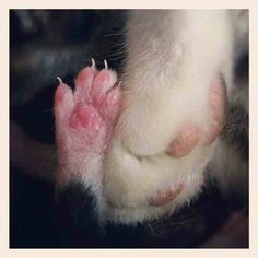 Mommy and baby cat paw Baby Cats, Cats And Kittens, Baby Animals, Cute Animals, Baby Kitty, Kitty Kitty, Cat Whiskers, Cat Paws, I Love Cats