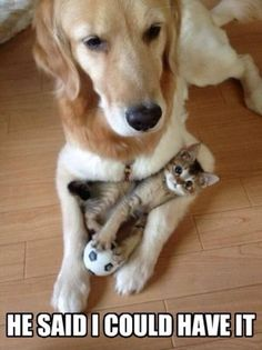 Adorable. Dog and kitty BFF.