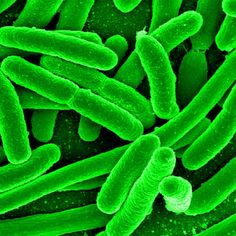 """""""You're F*cking Weak!"""" Against SUPERBUGS! Get Outside, Get Dirty, Get Off Grid & Stay Healthy"""