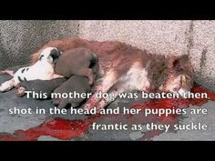 Dog Abuse From The Dog, Cat, Animal Slaughter In China To Puppy Mills Help close down the puppy mills and stop the abuse!