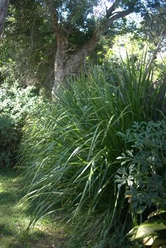Lomandra as a fence screen - Mallee Design Australian Garden Design, Australian Native Garden, Beautiful Flowers Garden, Beautiful Gardens, Fence Screening, Screening Ideas, Lomandra, Bush Garden, Garden Bed