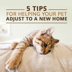 5 Tips For Helping Your Pet Adjust to a New Home #pets #cats #dogs #dogsandmoving