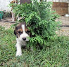 My Christmas tree...need decorations....please!