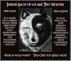 WHICH WOLF WINS? THE ONE YOU FEED THE MOST!