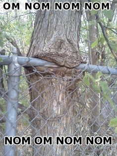 Dis tree has a mouth - mr pregnant