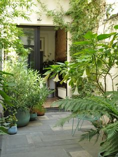 stefan morael tuinarchitect / een subtropische tuin, bruxelles