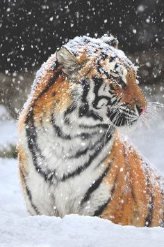 ATO - modernambition:  Snowy Day | WF | Instagram
