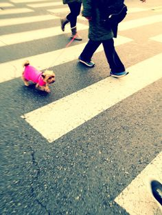 . Street Photography, Jade, About Me Blog, Film, Movie, Film Stock, Cinema, Films