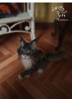http://www.ebay.com/itm/OOAK-Dollhouse-Miniature-1-12-Maine-coon-cat-Bud-Handmade-Realistic-cat-/182024314257?hash=item2a617e9d91:g:mv0AAOSwFNZWwTlB