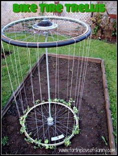 Bike tyre trellis. Reusing AND gardening -- two of our favorite things!