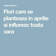 Flori care se planteaza in aprilie si infloresc toata vara Home And Garden, Herbs, Gardening, Flowers, Agriculture, Plant, Lawn And Garden, Herb, Royal Icing Flowers