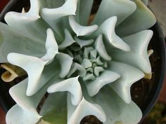 015Abstract_Plants by Neville Trickett, via Flickr