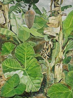 Lucian Freud- Plants in Jamaica - 1953