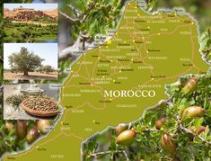 The map of the forest argan tree in morocco. خريطة غلبة شجر الاركان بالمعرب. #argan #tree #arganoil #cosmetics City Resort, Traditional Fashion, Travel Memories, Argan Oil, Beauty Secrets, Morocco, Cities, Scenery, Presentation