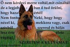 Animals And Pets, Cute Animals, Dog Quotes Love, Hyena, Little Dogs, Corgi, Lol, Erika, Animal Pictures
