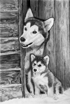 Many beginners try Easy Pencil Drawings Of Animals as animal are one of the most well liked subjects for artists to draw. Many people like to draw animals' Easy Pencil Drawings, Pencil Drawings Of Animals, Amazing Drawings, Realistic Drawings, Amazing Art, Wolf Painting, Graphite Drawings, Dog Paintings, Italian Artist