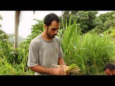 Finca El Paraíso - www.agroecologiapr.org - YouTube