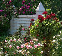 Garden Fence Flowers Art Prints by Roger Dullinger - Shop Canvas and Framed Wall Art Prints at Imagekind.com