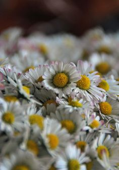 Daisy flowers can also use jelly breath seeds- Auch Gänseblümchenblüten können Gelee – Attensaat Daisy jelly. A long-forgotten recipe. Healthy Eating Tips, Healthy Nutrition, Healthy Recipes, Drink Recipes, Chutneys, Diy Food Gifts, Edible Flowers, Daisy Flowers, Daisies