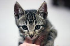 Reddit meet our new kitten Khajiit! http://ift.tt/2qhMN7S