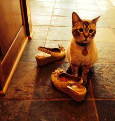 Karma the Shoe-Thief (among other things!)  http://amyshojai.com/2014/05/22/bra-klepto-cat-steals-bras/