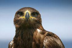 Nieuw in mijn Werk aan de Muur shop: Roofvogel
