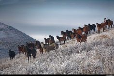 Красота по-казахстански
