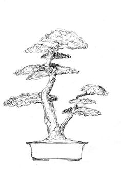 Bonsai sketch